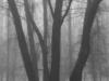 landscape-fotosova-21-of-70