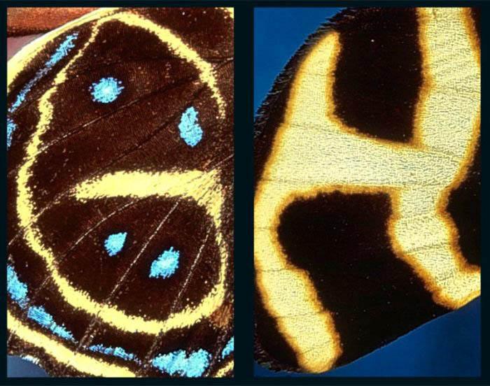 Креативная фотография. алфавит на крыльях бабочек