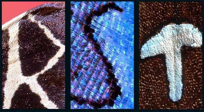 Креативная фотография. алфавит на крыльях бабочек R-S-T