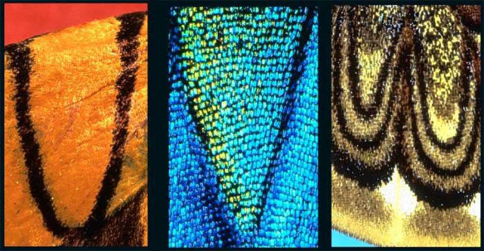Креативная фотография. алфавит на крыльях бабочек U-V-W
